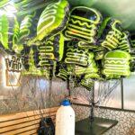 Shake Shack Helium Balloons Delivery Singapore
